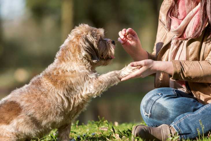Young woman boosting her dogs training with treats