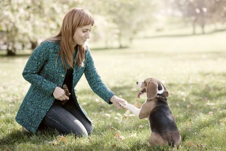 Woman training her beagle to shake paw