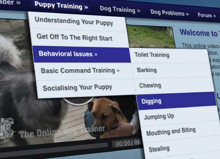 Inside the online dog trainer program