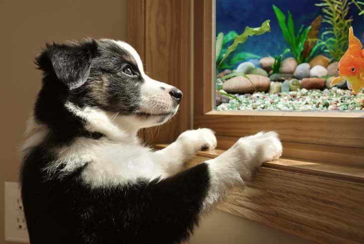 Cute dog obsessed with new fish tank