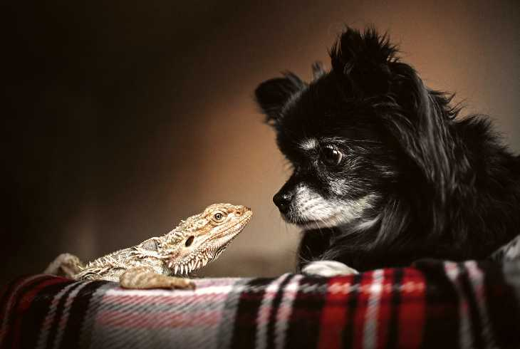 Reptile and dog looking at each other
