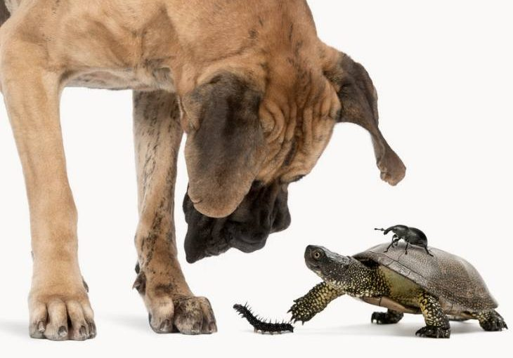 Dog and reptile pet mix