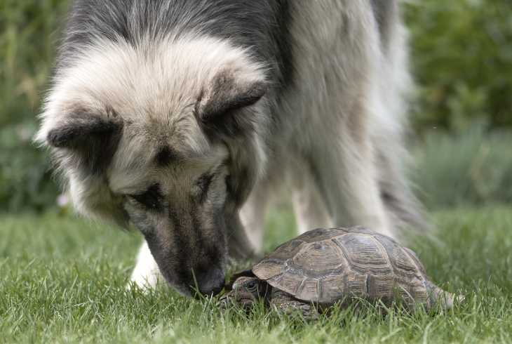 Dog and turtle playing on grass