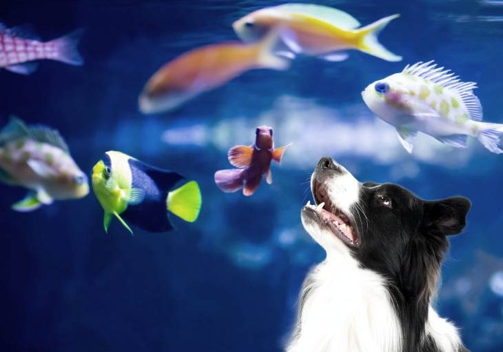 Tips to keep your dog away from fish tank