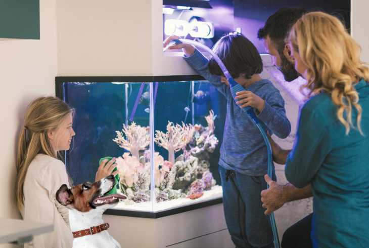 Family and dog cleaning aquarium