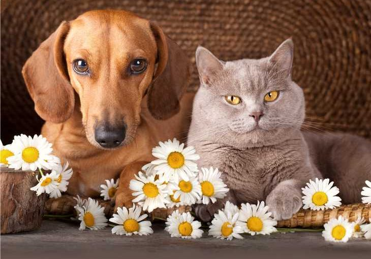 Five best cat breeds for dogs