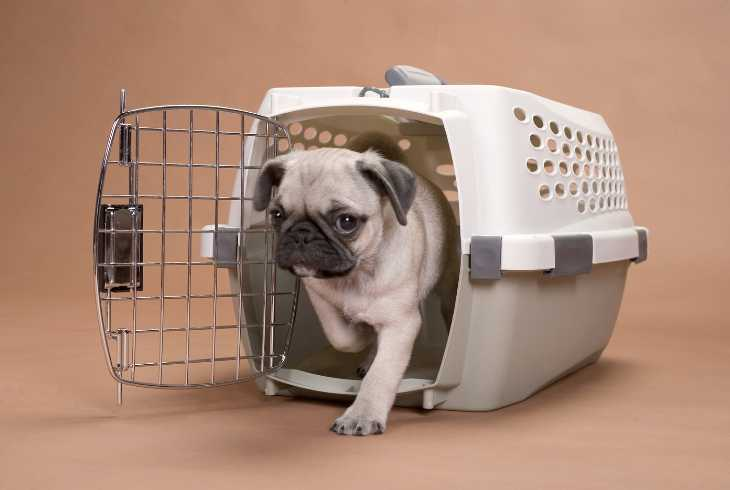 Pup starting carte training