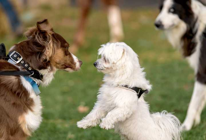 Dogs socializing in the park