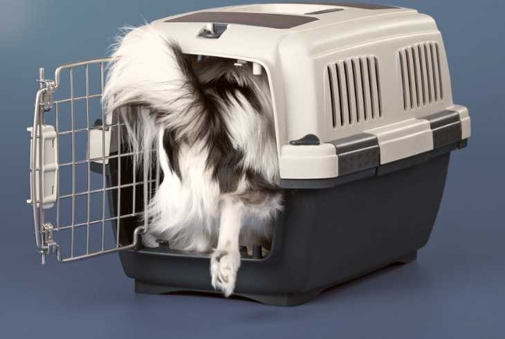 Pup going into his crate