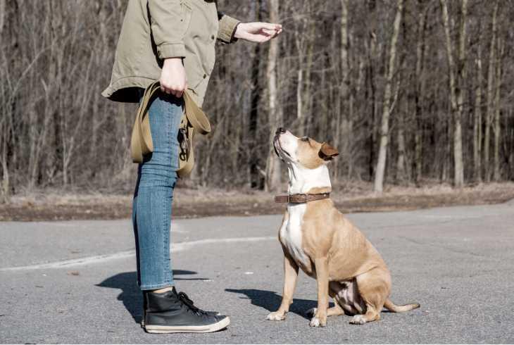 Owner treating good dog
