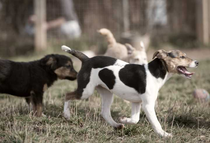 Two dogs doing the rump sniff