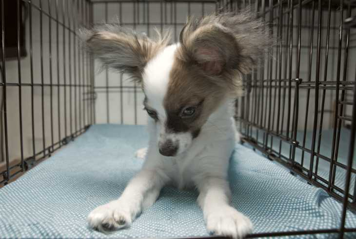 Young shy pup in kennel