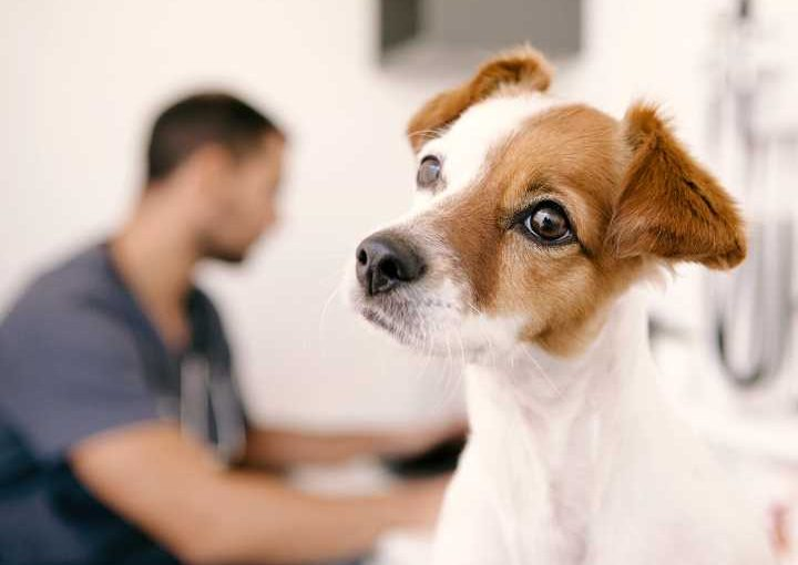 Dog vet anxiety tips