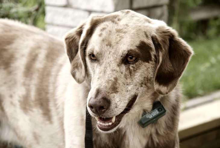 Dog with Ecollar