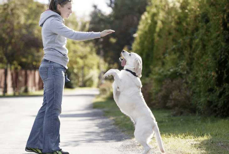 Girl playing with her Labrador dog