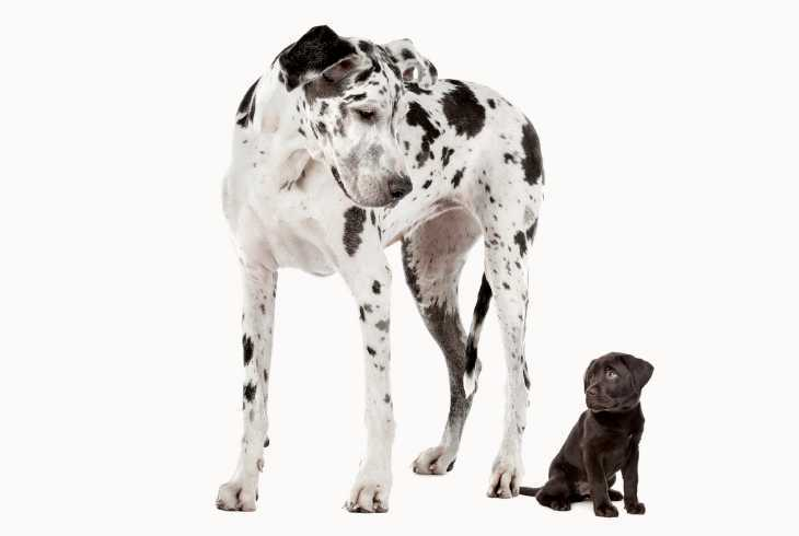 Big and small dog on white background