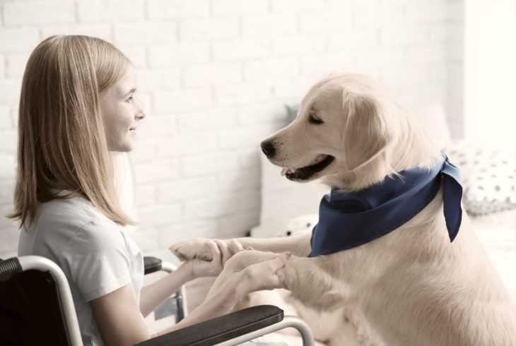 Girl in wheelchair with medical service dog