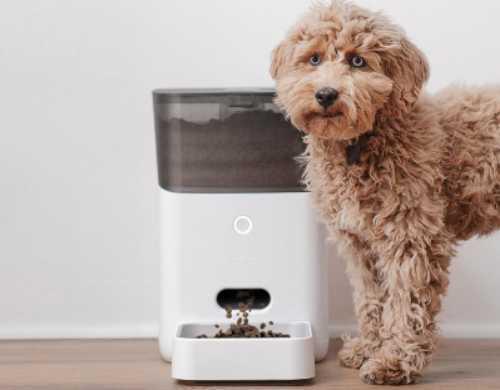 Cute dog with the Petnet dog feeder