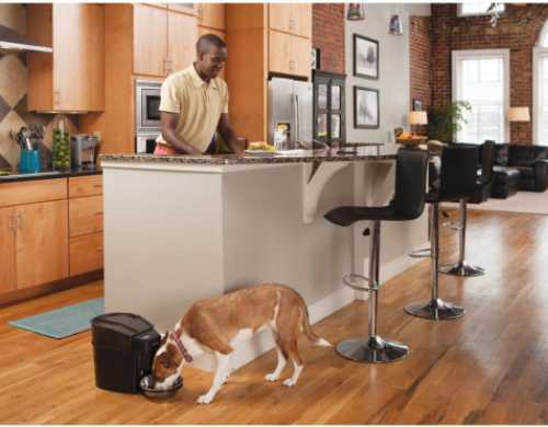Dog eating out of a Petsafe healthy pet feeder