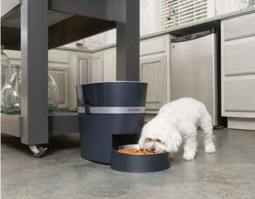 White dog eating out of a Petsafe Smart Feeder