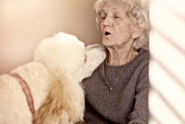 Service dog sniffing senior woman