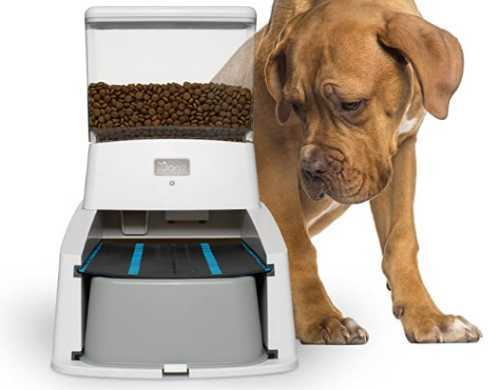 Brown dog looking at his Wagz dog feeder