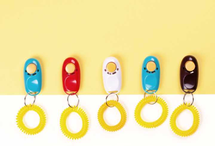 Colorful clickers for training dogs