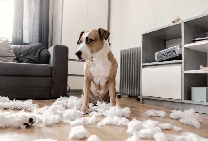 Bored dog and a destroyed teddy bear at home