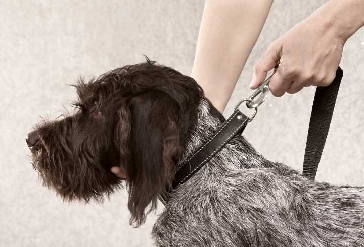 Dog getting reading for the umbilical cord method of training