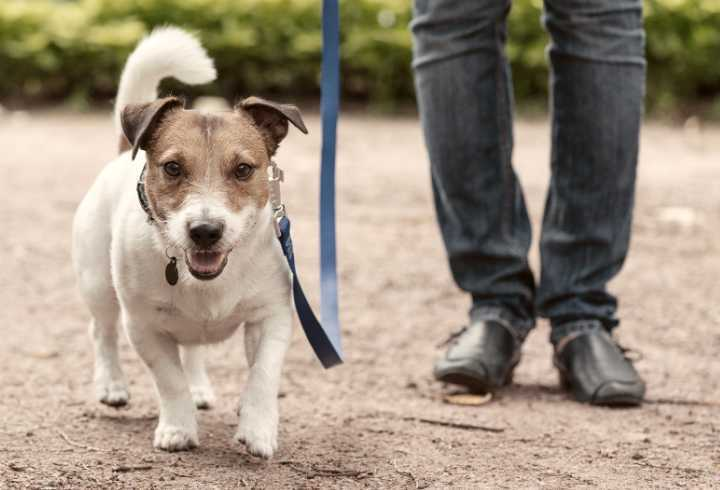 Cute dog on leash in training