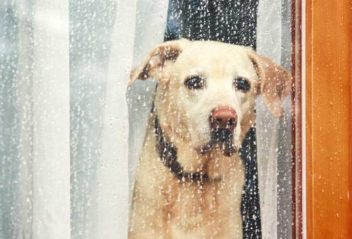 Sad Dog waiting home alone