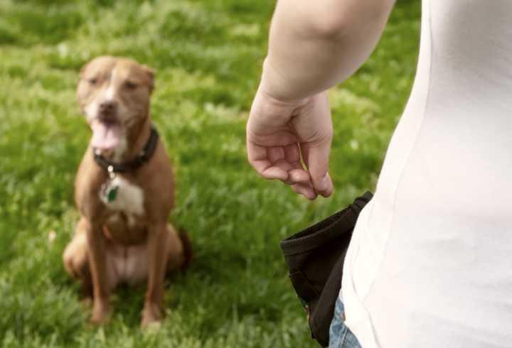 Training dog with treats from treat bag