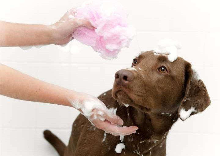 Tips how to bathe dog afraid of water