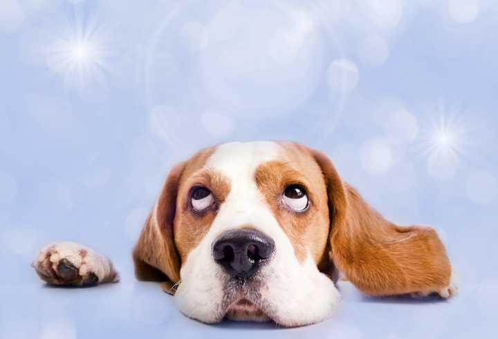 Canine rolling eyes while sleeping