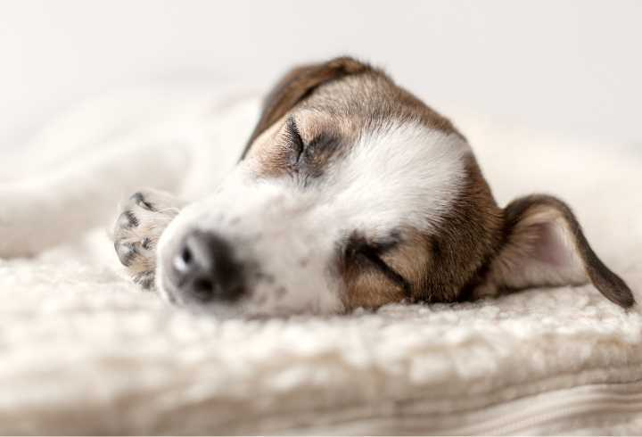 Cute puppy sleeping in comfy dog bed