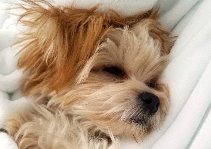 Why dogs sleep with their eyes open