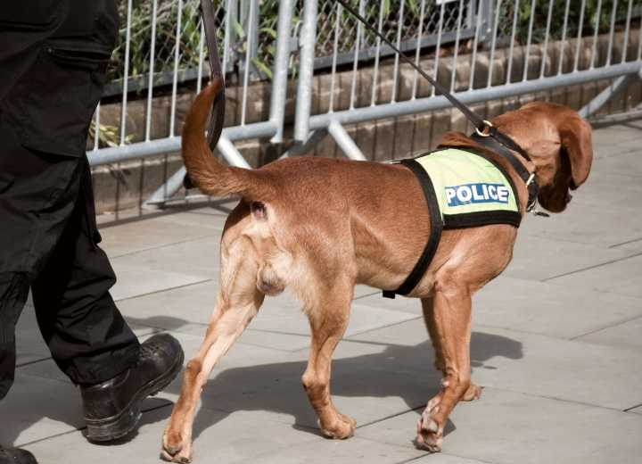 Police sniffer dog at work