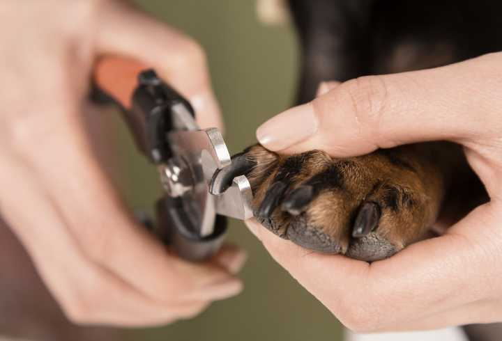 Dog nails are getting trimmed