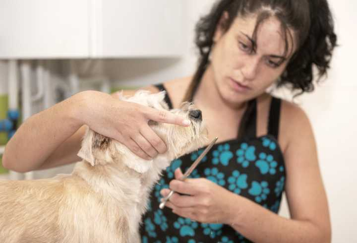Woman trimming dog hair with scissors
