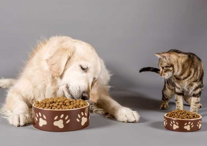 Different pet food trends