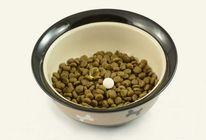 Pet supplements on dog food in a bowl