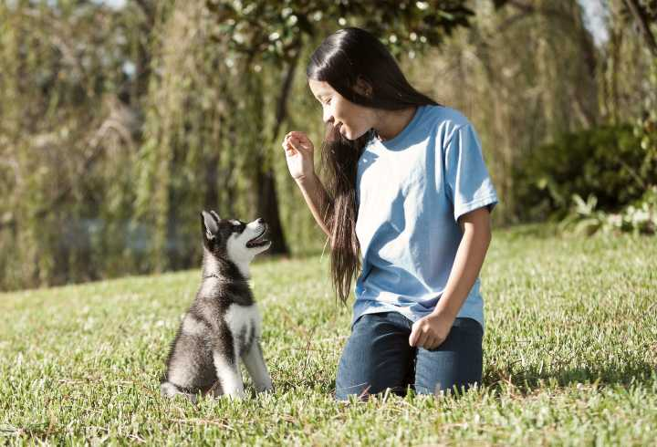 Girl training cute Husky puppy