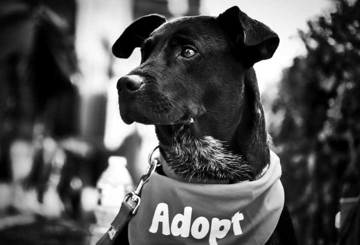 Black and white rescue dog waiting for adoption