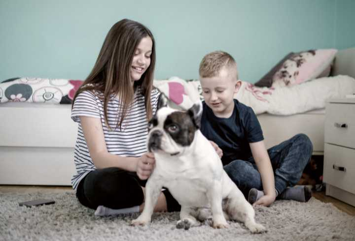 Kids playing with dog on carpet in bedroom