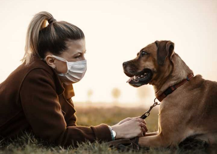 Top reasons to get a dog during quarantine