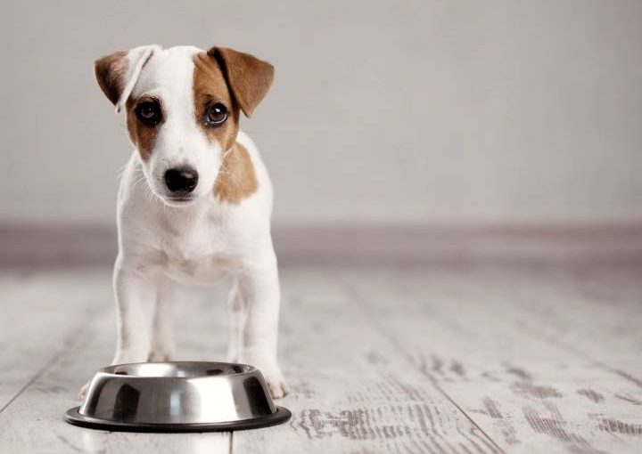 Dog with tips to buy pet food online