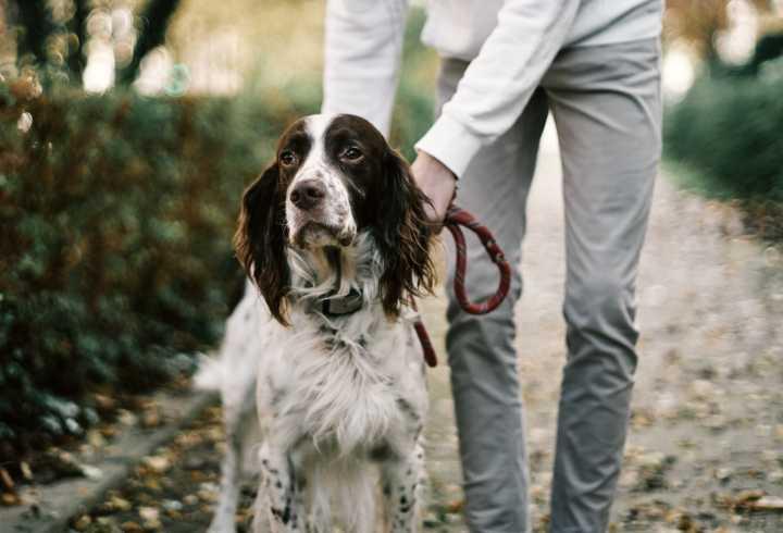 Pet owner training rescue dog