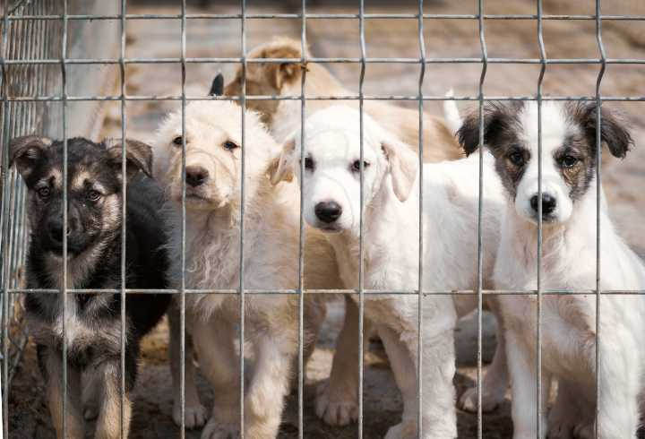 Puppies in animal shelter