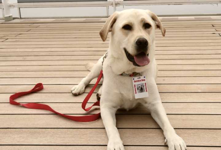 Trained service dog