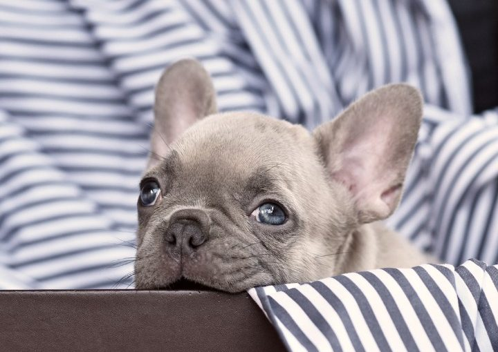 Protect furniture from a teething puppy